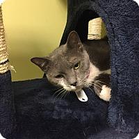Adopt A Pet :: Sabrina - The Colony, TX