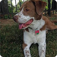Adopt A Pet :: Kelly - Richmond, VA