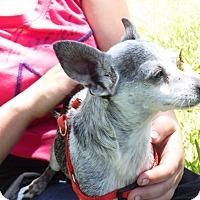 Adopt A Pet :: Zorro - Malabar, FL