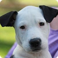 Adopt A Pet :: MacGregor - Nanuet, NY