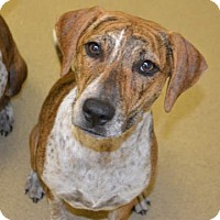 Adopt A Pet :: Betty - Miami, FL