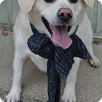 Adopt A Pet :: Braut - Lafayette, IN