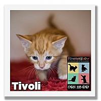 Adopt A Pet :: Tivoli - Palm Desert, CA