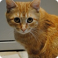 Adopt A Pet :: Ginger - Lafayette, NJ