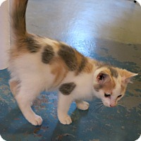 Adopt A Pet :: Tulip - Geneseo, IL