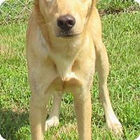 Adopt A Pet :: Gleason - Reeds Spring, MO