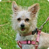 Adopt A Pet :: Diedra - carlsbad, CA