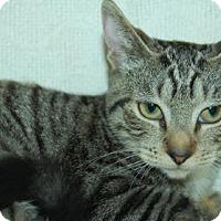 Adopt A Pet :: Kaye - Bradenton, FL