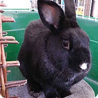 Adopt A Pet :: Dottie - Alexandria, VA