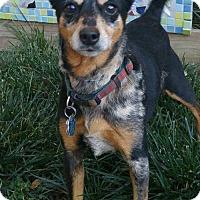 Adopt A Pet :: Lola - Greenville, SC