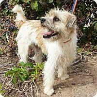 Adopt A Pet :: Genteel Little Gerald - Albuquerque, NM