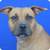 Adopt A Pet :: SUKI - LAFAYETTE, LA