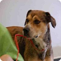 Adopt A Pet :: ELSA - Panama City, FL