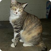Adopt A Pet :: ADELE - Phoenix, AZ