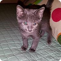 Adopt A Pet :: Olivia - Tampa, FL
