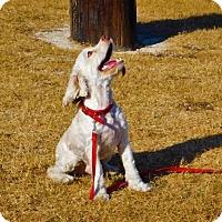 Adopt A Pet :: Nicky-101908j - Tupelo, MS