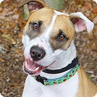 Adopt A Pet :: Lilah - North Haledon, NJ