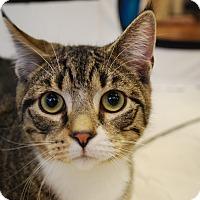 Adopt A Pet :: Clyde (Foster) - Exton, PA