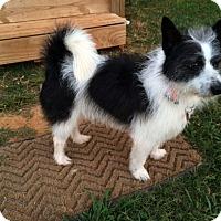 Adopt A Pet :: Charlie - Salisbury, NC