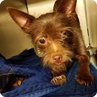 Adopt A Pet :: Meaty - Albemarle, NC