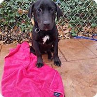 Adopt A Pet :: Bailey - Verona, NJ
