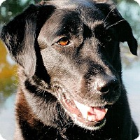 Adopt A Pet :: Jett - Fairfax, VA