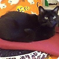 Adopt A Pet :: Henrietta - Pekin, IL