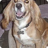 Adopt A Pet :: Jill - Sugarland, TX
