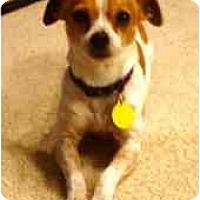 Adopt A Pet :: Jenny - San Francisco, CA