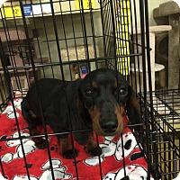 Adopt A Pet :: Cece - Gainesville, FL
