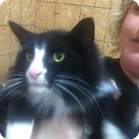 Adopt A Pet :: Cooper - Carey, OH