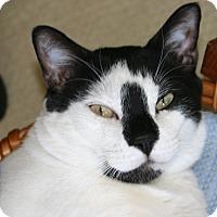 Adopt A Pet :: Homer - Waxhaw, NC