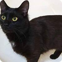 Adopt A Pet :: Felix - Greer, SC