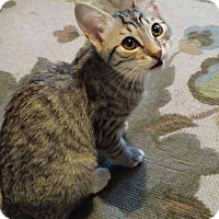 Adopt A Pet :: Paprika - Chandler, AZ