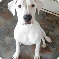 Adopt A Pet :: Marco-VA - Virginia Beach, VA