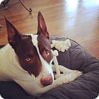 Adopt A Pet :: Petey - Howell, MI