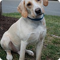 Adopt A Pet :: Oliver - Richmond, VA