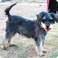Adopt A Pet :: Jingle - Gilbert, AZ