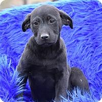 Adopt A Pet :: Landry - Groton, MA