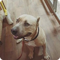 Adopt A Pet :: Zane - Georgetow, TX