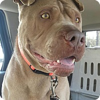 Adopt A Pet :: Chauncey -pending - Mira Loma, CA