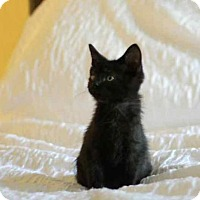 Adopt A Pet :: A378443 Rosarita - San Antonio, TX