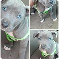 Adopt A Pet :: Axl - Atlanta, GA