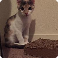 Adopt A Pet :: Lucille - Parlier, CA