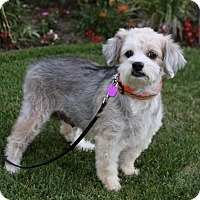 Adopt A Pet :: MELROSE - Newport Beach, CA
