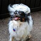 Adopt A Pet :: Ba'cho (in GA)