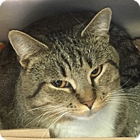 Adopt A Pet :: Ratchett - Manchester, NH