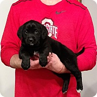 Adopt A Pet :: Molly - New Philadelphia, OH