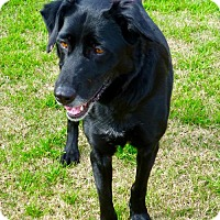 Adopt A Pet :: Nellie - Anaheim, CA