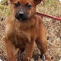 Adopt A Pet :: Emma - Brattleboro, VT
